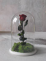 Роза в колбе стабилизированная со мхом