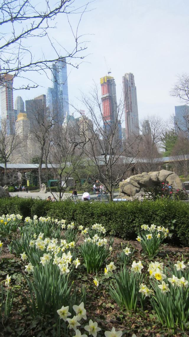 Раздел Летние сарафаны - фото teens.ua - Нью-Йорк,в Центральном парке цветут ирисы