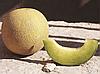 Семена дыни Темпо F1 1000 семян Clause