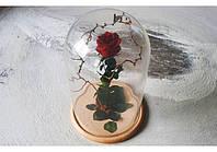 Роза стабилизированная с шипами