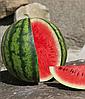 Семена арбуза Катрин F1 1000 семян Clause