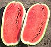 Семена арбуза Каролина F1 1000 семян Clause