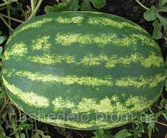 Семена арбуза Мэдисон F1 1000 семян Clause