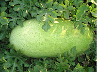Семена арбуза Чарльстон Грей 0,5 кг . Clause