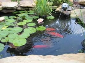 Обладнання для садових ставків