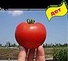 Семена томата Багира F1 5 гр. Clause