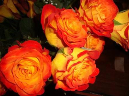 """Роза  Чайно-гибридная сорт """"Циркус"""" ( саженцы высшего качества, класс АА+ ), фото 2"""