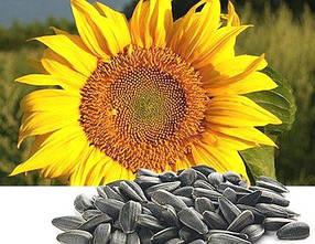 Семена подсолнечника Сальза (устойчивость к заразихе A-D) 102 дня, Euralis Semences