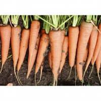 Морковь Скарла  0,5 кг