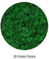 Стабилизированный мох опт цвета в ассортименте трава norske moseprodukter, фото 4