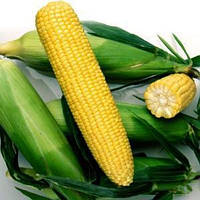 Харди кукуруза  5000 сем. Никерсон РV