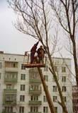 Услуги по обрезке и спилу деревьев в Киевской области