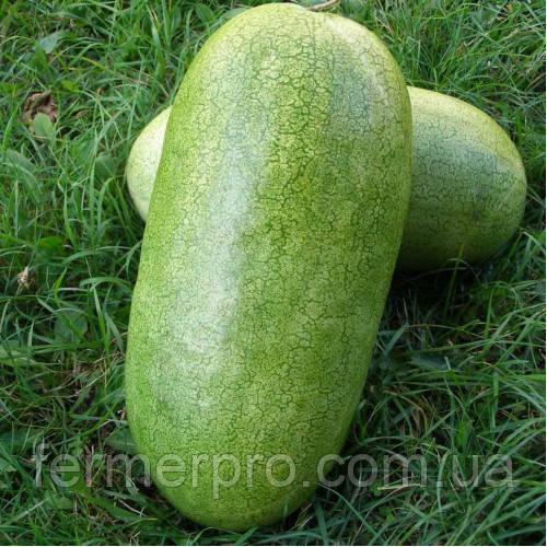 Семена арбуза Чарльстон Грей \  Charleston Gray 0,5 кг  Clause