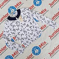 Детская блузка для девочек в бабочки Catherine. ПОЛЬША