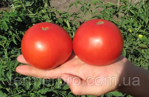 Семена томата Багира F1 Clause 5 грамм