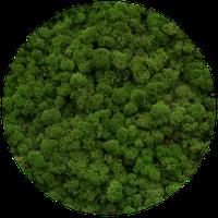 Мох стабилизированный 80 medium green. Мох для декорації, стабілізований.