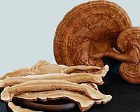 Ганадерма слайсы уникальный гриб Линчжи (Рейши) 500гр