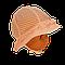 Панамка в полупрозрачный горошек Єви Elf-Kids 42р., фото 3