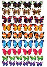 Вафельна картинка Метелики 16