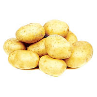 Картофель молодой отечеств.