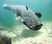 Ожидаемый рыбный клев на 5, 6 ноября.
