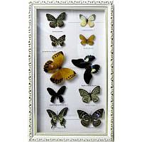 Бабочки в рамке (10 шт)(50,5х30,5  см) , Картины, Бабочки в рамке, Панно, Ключницы