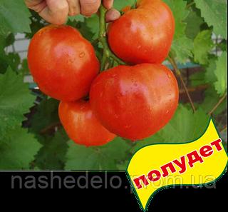Семена томата Альянс F1 250 семян Clause
