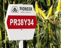 Кукуруза Pioneer PR38Y34 (ФАО 290 Среднераниий) 2013г.
