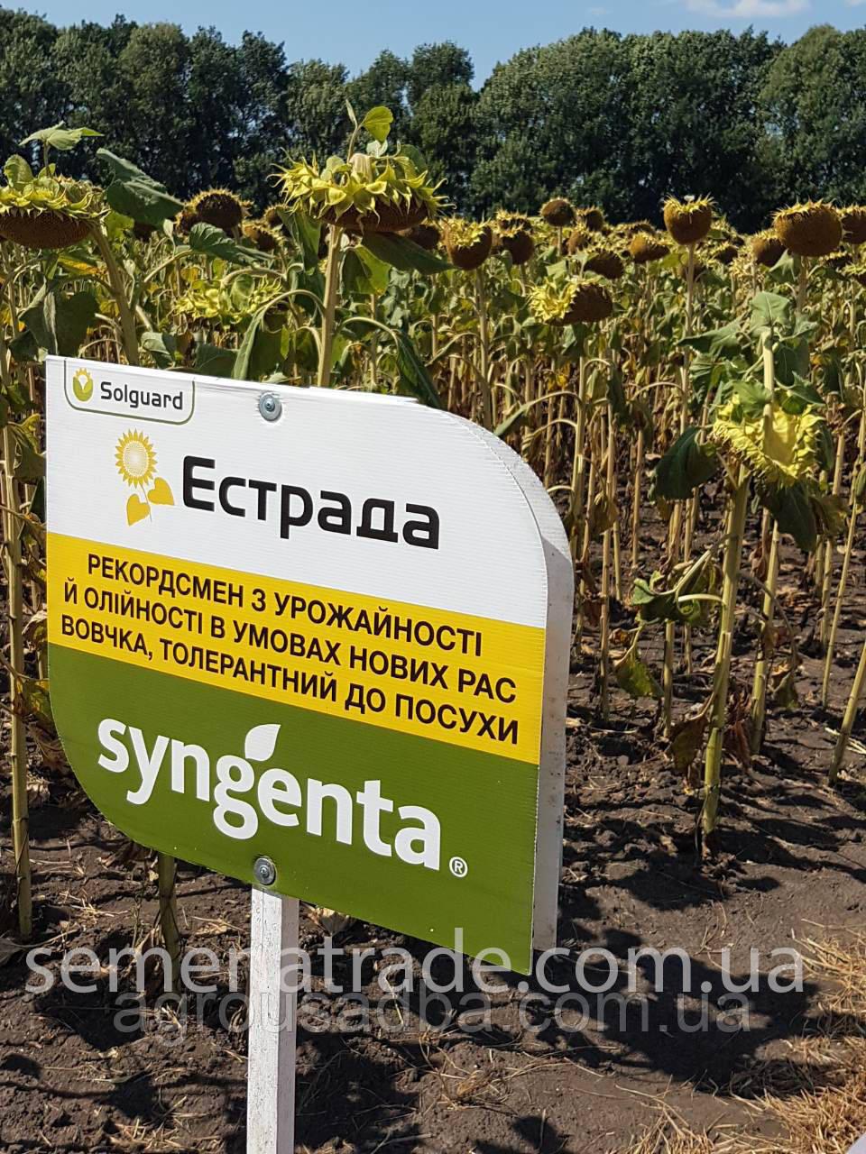 Подсолнечник Syngenta Эстрада Среднепоздний (118-122 дней)  2017 г.