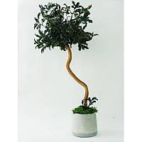 Стабилизированное дерево Оnly naturalness