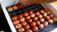 Инкубаторы с механическим переворотом яиц.