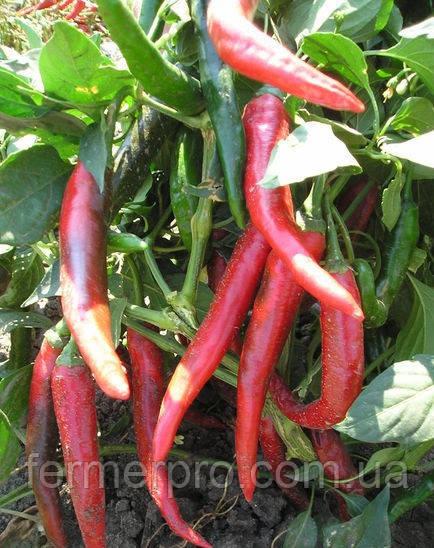 Семена перца  Импала F1 \ Imapala 5 грамм (Бибо) Clause