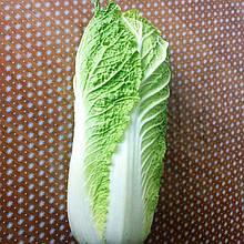 Семена пекинской капусты Билко F1 (2500 сем.) Bejo