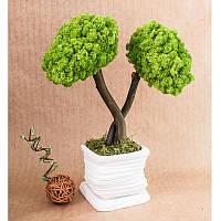 Стабилизированное дерево Tree Wasabi