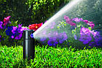 Основные рекомендации по поливу растений