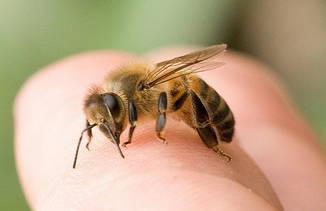 Аллерген яда насекомых (пчелы, осы)