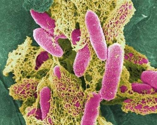 Бактериальный лизат ОМ 2