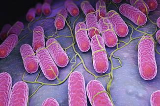 Бактериальный лизат ОМ 3