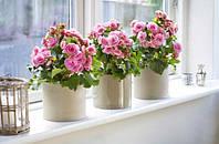 Энергосберегающее стекло вредит растениям?