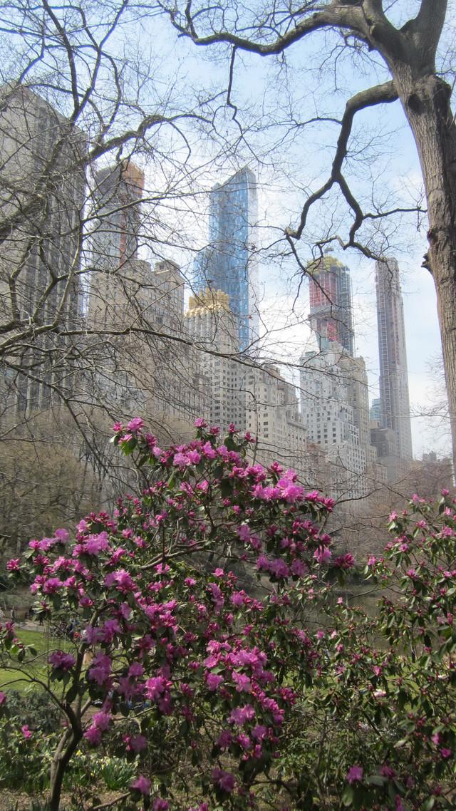 Раздел Капри - фото teens.ua - Нью-Йорк,Центральный Парк в цвету