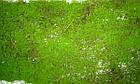 Камень искусственный мшистый 16*13 см, фото 2