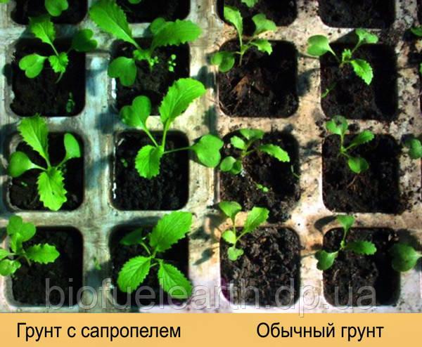 Удобрение, Сапропель, Грунт