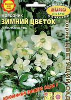 Морозник Зимний цветок