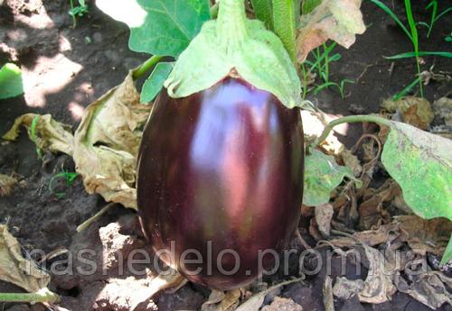 Семена баклажана Галинэ F1 50 гр. Clause