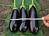 Семена баклажана Фабина F1 50 гр. Clause