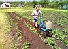 Окучник для картофеля: виды и характеристики