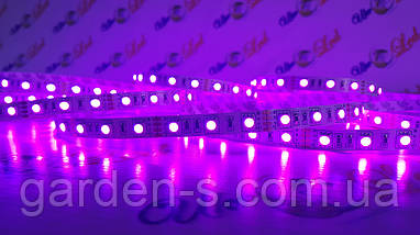 Светодиодная лента SMD5050 60d/m IP33 (RGB), фото 2