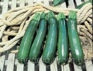 Семена баклажана Тармино F1 500 семян Clause