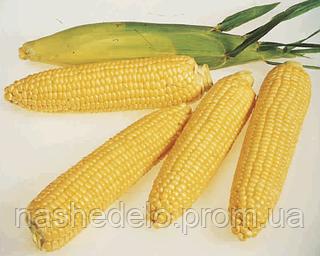 Семена кукурузы сахарной Леженд F1 1 кг. Clause
