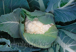 Семена цветной капусты Немо F1 2500 семян Clause